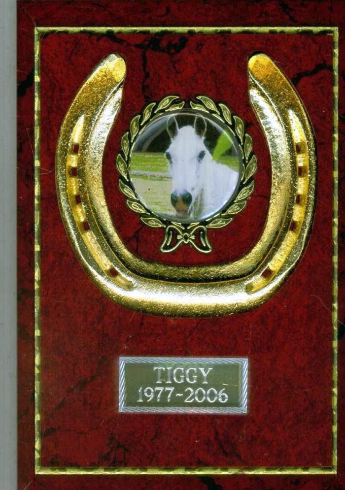 Horse Shoe Plaque Gold
